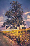 John Rivera - Lone Tree in Meadow