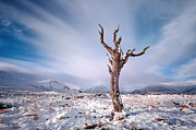 Rannoch Photo Prints - Lone tree in the snow Print by Grant Glendinning