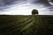 Lanarkshire Prints - Lone tree  Print by John Farnan
