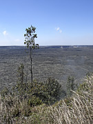 Pele Photos - Lone Tree Kilauea Crater by Daniel Hagerman
