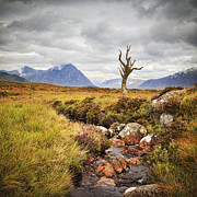 Rannoch Photo Prints - Lone Tree Rannoch Moor Scotland Print by Colin and Linda McKie
