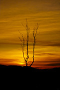 Tree Pyrography - Lone tree sunset by Derek Moffat