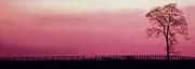 Jeff Brunton - Lone Tree Sunset