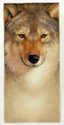 Color Pencil Drawings - Lone Wolf by Anandkumar Kaliaperumal