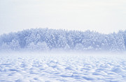 Snowed Trees Photo Metal Prints - Loneliness in winter Metal Print by Patrick Kessler