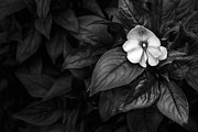Black And White Prints Originals - Lonely 1 by Jon Glaser