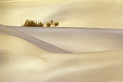 Sand Dunes Prints - Lonely Bush Print by Paul W Faust -  Impressions of Light
