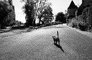 Apremont Posters - Lonely cat Poster by Oleg Koryagin