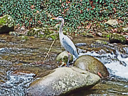 Gatlinburg Posters - 	Lonely Crane				 Poster by Regina Hall