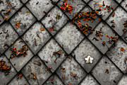 Tiles Photos - Lonely Flower by Justin Albrecht