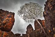 Lonely Gum Tree Print by Dirk Ercken