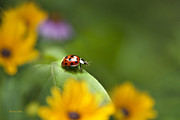 Floral Digital Art Posters - Lonely Ladybug Poster by Christina Rollo
