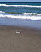 Lone Gull Prints - Lonely Sea Gull Print by Allan  Hughes