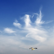 Air Photos - Lonely Seagull by Setsiri Silapasuwanchai