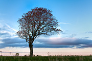 Big Tree Photos - Lonely Tree At Dusk by Matt Dobson