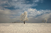 Caroline Pirskanen - Lonely Tree