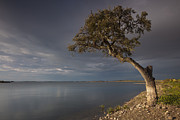 Alentejo Photos - Lonely tree in Alqueva by Ruben Vicente