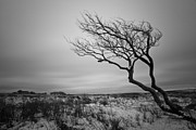 Harsh Prints - Lonely tree in Exmoor Print by Ruben Vicente