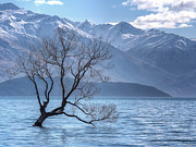 Kim Andelkovic - Lonely Tree