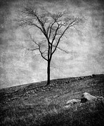 Outlook Bleak Prints - Lonesome Tree Print by Mary Lane