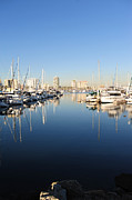 Docked Sailboats Originals - Long Beach Harbor  by Sarah Kramer