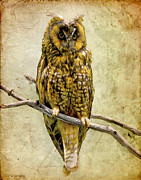 Ray Downing Digital Art Posters - Long Eared Owl Poster by Ray Downing