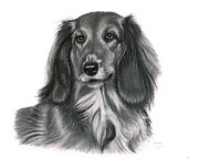 George Horsey - Long Haired Dachshund