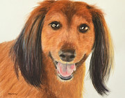 Hound Pastels Framed Prints - Long Haired Dachshund Framed Print by Kate Sumners