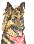 Purebred Pastels Framed Prints - Long Haired German Shepherd in Red Bandana Framed Print by Kate Sumners