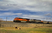 Bnsf Framed Prints - Long Horn Cattle and Coal Train Framed Print by Ken Smith