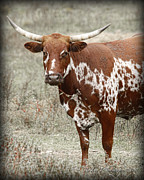 Long Horn Cow Photos - Long Horn  by Pic