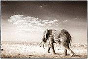 African Wild Life Posters - Long Way To Go Poster by Mike Gaudaur