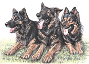 Shepherds Drawings Prints - Longhaired German Shepherds Print by Nicole Zeug