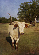 Daytime Digital Art Framed Prints - Longhorn Framed Print by Elena Nosyreva
