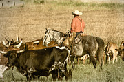 Saddle Photos - Longhorn Round Up by Steven Bateson