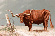 Steer Paintings - Longhorn Steer by DiDi Higginbotham