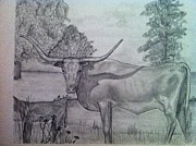 Longhorn Drawings Posters - Longhorn with calf Poster by Tony McCullough