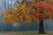 Darlene Bushue - Longing for Autumn
