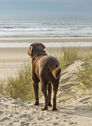 Dog Play Beach Posters - Longing Poster by Jean Noren