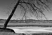 James BO  Insogna - Longs Peak Geese BW