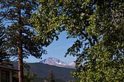 Longs Peak Through The Trees Print by Kay Pickens