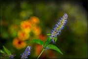 LeeAnn McLaneGoetz McLaneGoetzStudioLLCcom - Look at Me Garden
