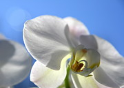 Orchids Art Print Prints - Look to the Sky  Print by Neal  Eslinger