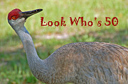Sandhill Crane Photos - Look Whos 50 by Aimee L Maher