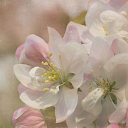 Cherry Blossom Prints - Look Within Print by Kim Hojnacki