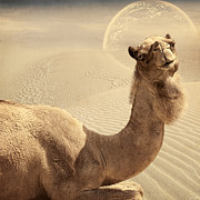 Camel Prints - Looking At Ya Print by Lourry Legarde