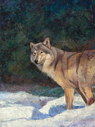 Wolf Pastels Posters - Looking Back Poster by Billie Colson