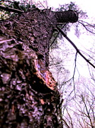 Tree And Wood Photography - Looking Down On Me by Allen n Lehman