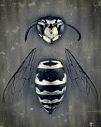 Bees Prints - Looking Down Upon Myself Print by Adam Romanowicz