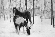 Winter Prints Framed Prints - Looking For A Bite Framed Print by Kathy Jennings